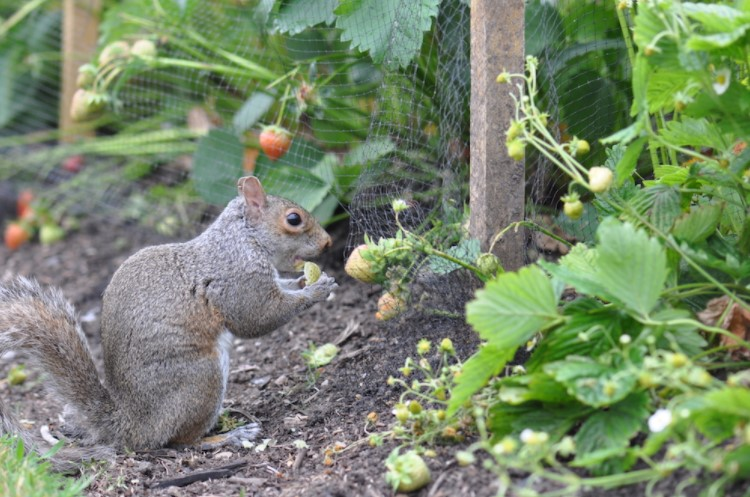 How to Make Squirrel Repellent for the Garden